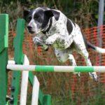 Dogs, Breeds, Dog Whisperer, Mason Vera Paine, Millennial, Dominic Hodgson